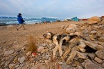 "Dead sled dog, ""euthanized"" due to lack of sea ice"