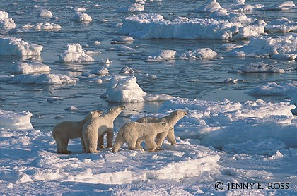 Family on a Floe